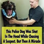 Police Dog Shot in Line of Duty