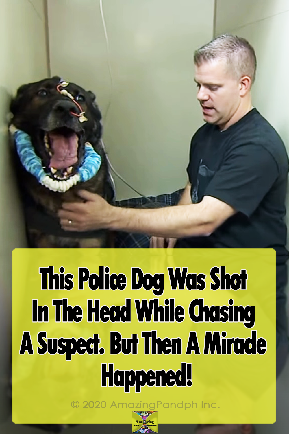 Police Dog, dogs, police, miracle, story, animals,