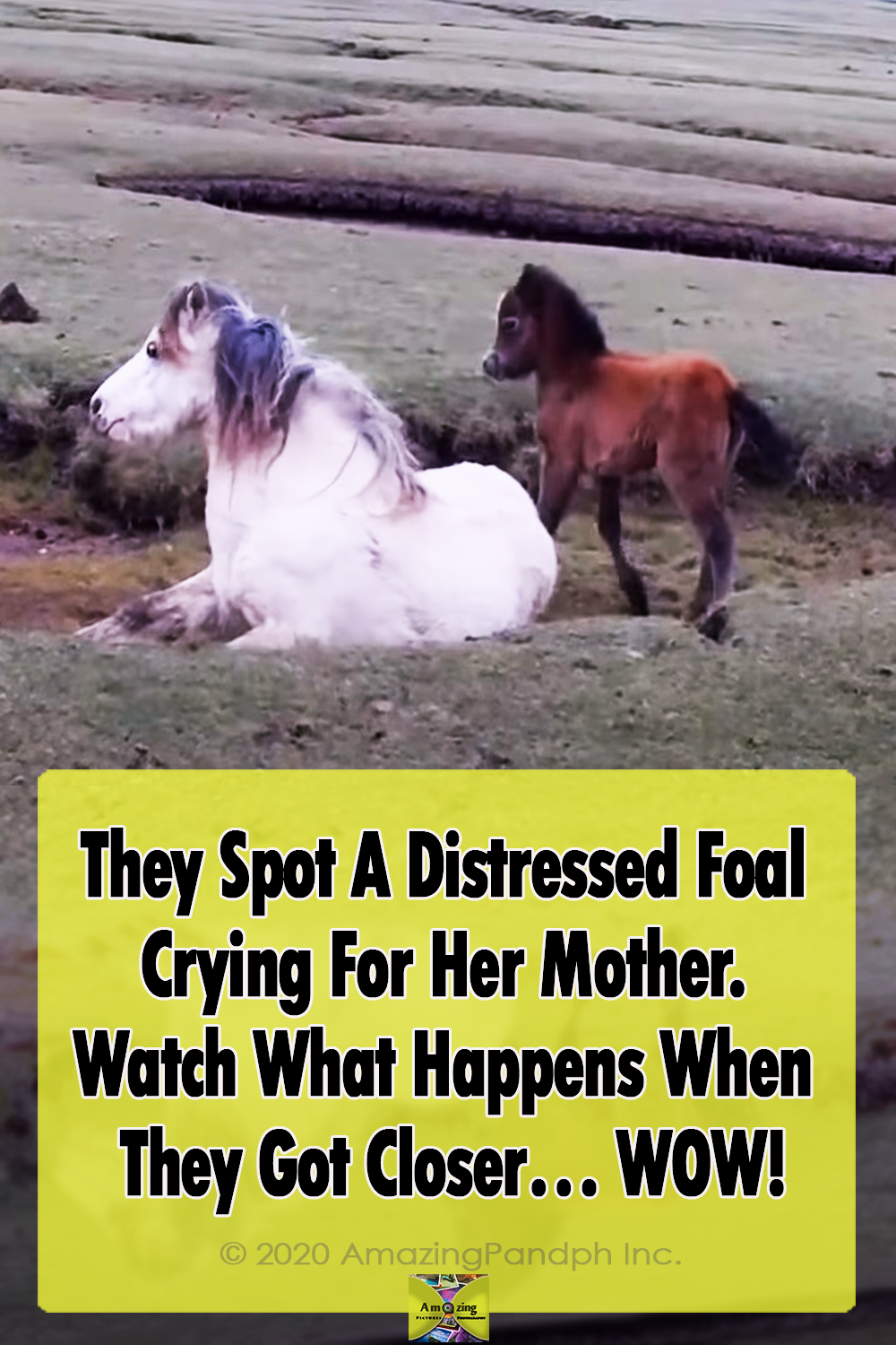 Foal, Mother, horse, touching, inspiring, rescue,