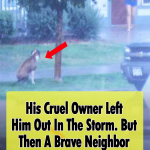 Saving An abandoned Dog From A Storm