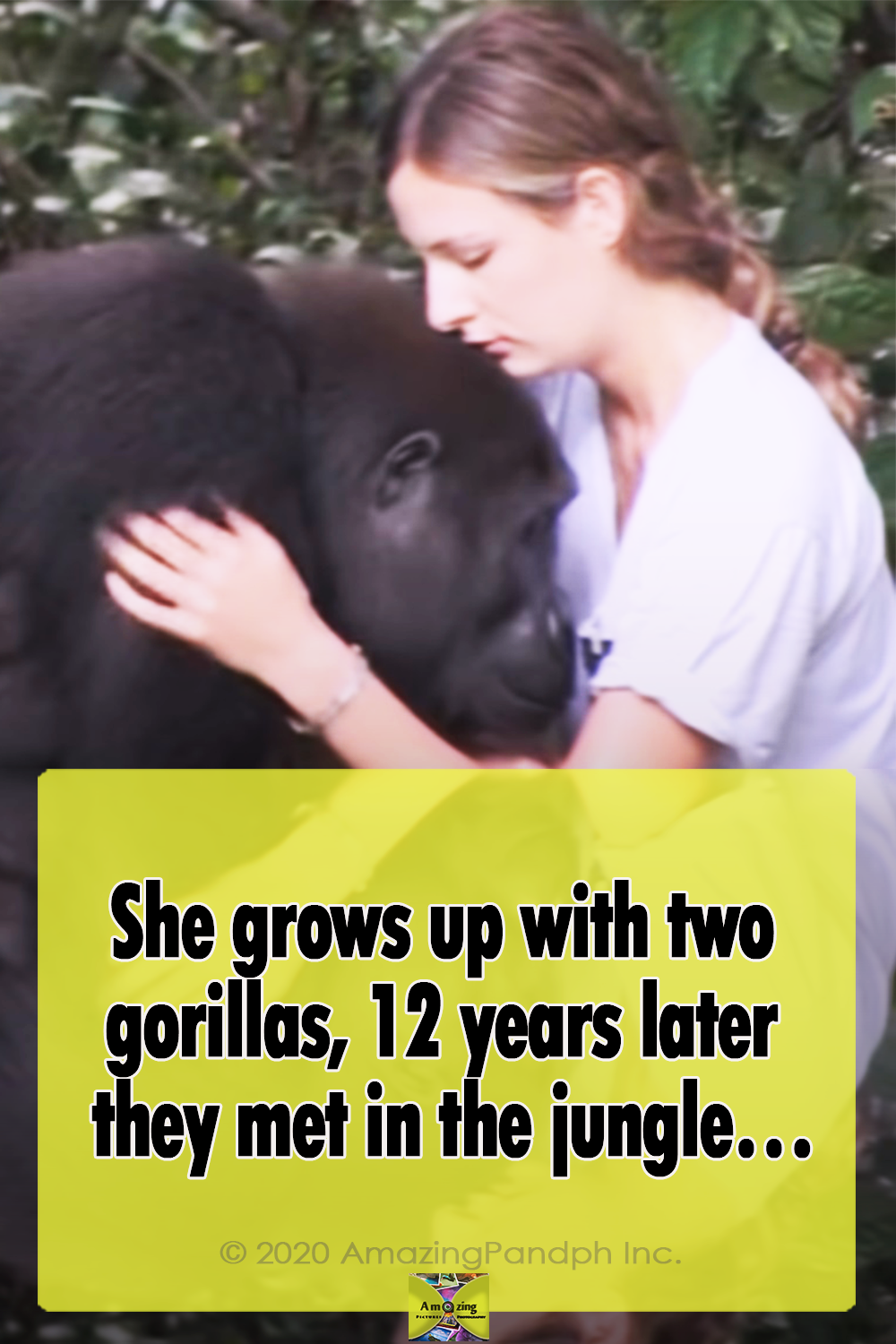 ,does a gorilla weigh,do gorillas swing on vines,do gorillas sweat,do gorillas live in the rainforest,do gorillas live in africa,do gorillas have tails,do gorillas eat meat,do gorillas eat bananas,do gorillas climb trees,difference between ape and gorilla,cross river gorilla,could a human fight a gorilla,could a gorilla raise a human baby,could a gorilla kill a lion,could a gorilla kill a human,could a gorilla kill a bear,could a gorilla impregnate a human,can you see the dancing gorilla,can gorillas swim,can a gorilla kill a lion,can a gorilla deadlift,bear vs gorilla,attack gorilla,about gorilla glue,about gorilla glass,a silverback gorilla,a lion vs a gorilla,a baby gorilla,apes breeding,apes are monkeys,apes animal,apes and monkeys,apes and humans,apes and great apes,apes and gorillas,apes algoma,apes acronym,apes a poppin,a new planet of the apes movie,a bathing apes,do jungle camps have armor,do jungles have winter,do jungles have bears,can jungle juice kill you,are jungles humid,are jungle worms real,are jungles rainforests,jungle cat,jungle jam,jungle drum,a jungle animal's life,a jungle story,jungle animal pictures,jungle animals,jungle fever,jungle island,animals in the jungle,an jungle juice,about neon jungle,animal,girl,grows up,two gorillas,gorilla,storie,true storie,best video,kids,speechless,reunion,a rumble in the jungle,