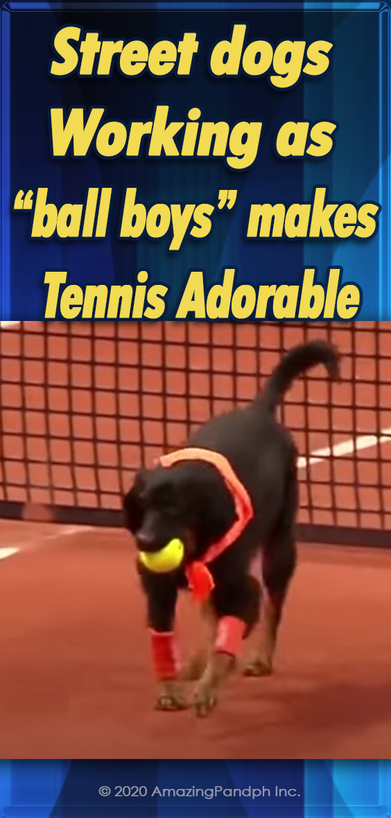 Street dogs, dogs, animals, adorable, sport, tennis, ball boys,