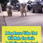 The Happiest Dog Rescue Story ever