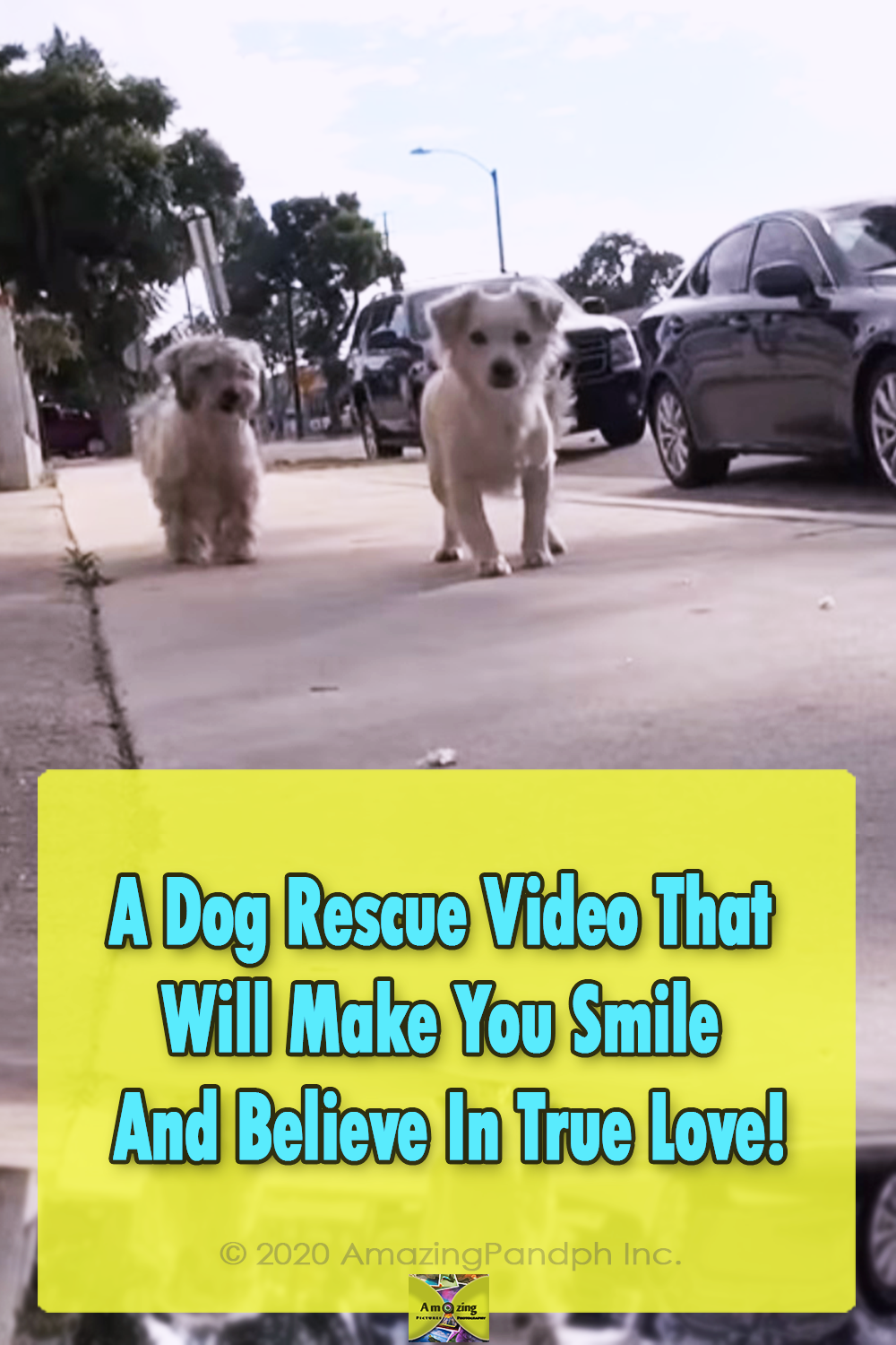 Dogs, Story, Rescue, Happy, animals, pets,