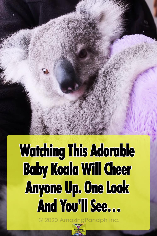 Adorable, Babies, Koala, animals, cute, adoption,