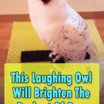 This Laughing Owl Will Brighten Your Days