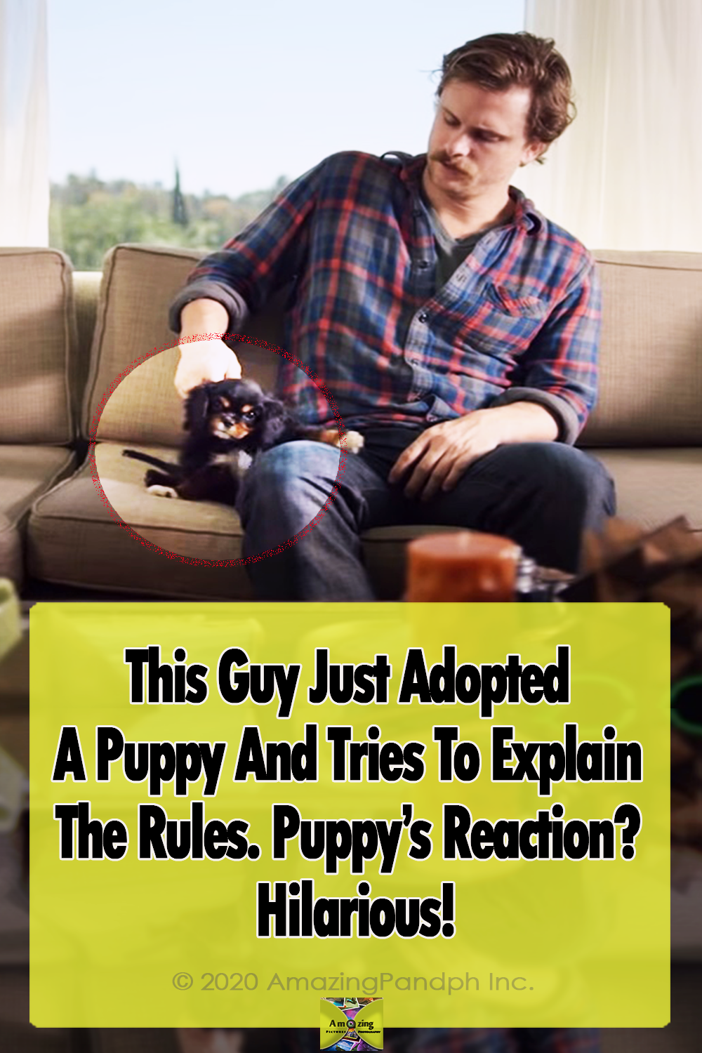 Puppy, adoption, ad, dogs, animals, pets, home rules,