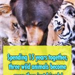 Unusual friendship between Three Beasts