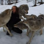 The reunion between Anita and the wolves
