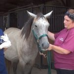 Pregnant Horse Rescued from Auction