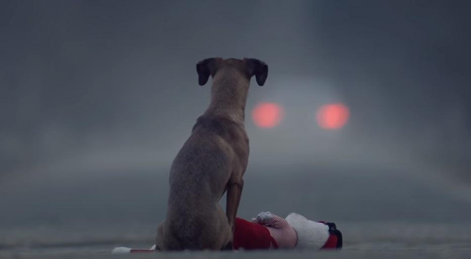 dog, abandoned, heartless, sad story, pets, short film, adoption,