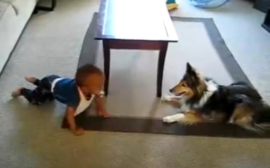 camera, filmed, home, dog, baby, playing, adorable, precious, cute,