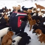 This Sanctuary is Like heaven for 450 rescued dogs