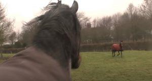 animals reunion, beautiful horses, Horse communication, Horses, Horses Reunion, wonderful animals, farm, emotional,