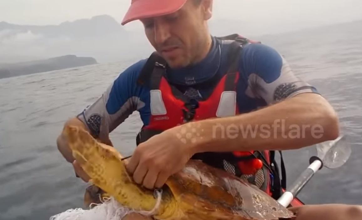 Kayaker, kayak, Sea, turtle, Pollution, plastic, animals, ocean, nature in danger, rescue, heroe,