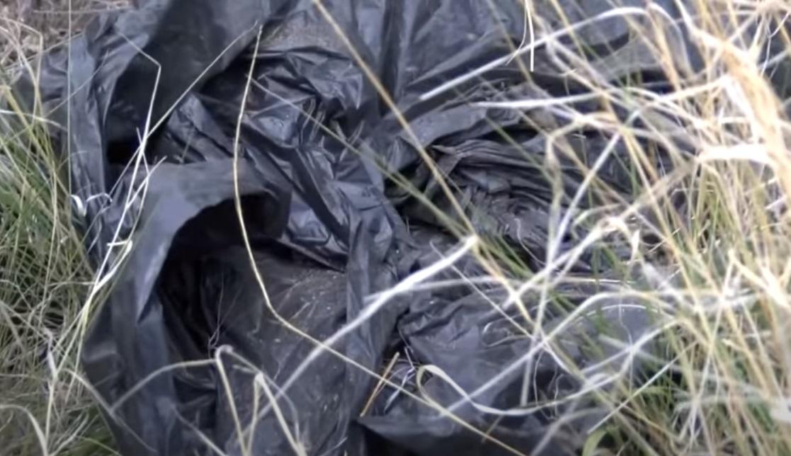 trash, dogs, puppies, kids, boys, adoption, abandoned,