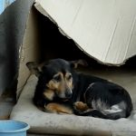 Box, dogs, stray-dog, rescue, adoption, homeless, heartwarming,