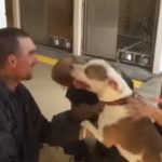 Stolen Pit reunited with his Owner after 7 months