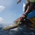 Unique Baby Turtle Rescue