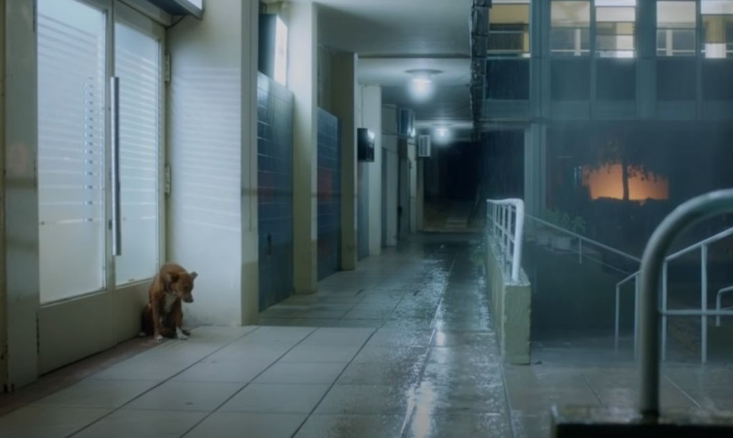 organ donation, dogs, relationship, emotional, best story, best ad,