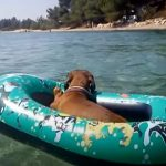 Hilarious Dachshund Enjoying the Holiday