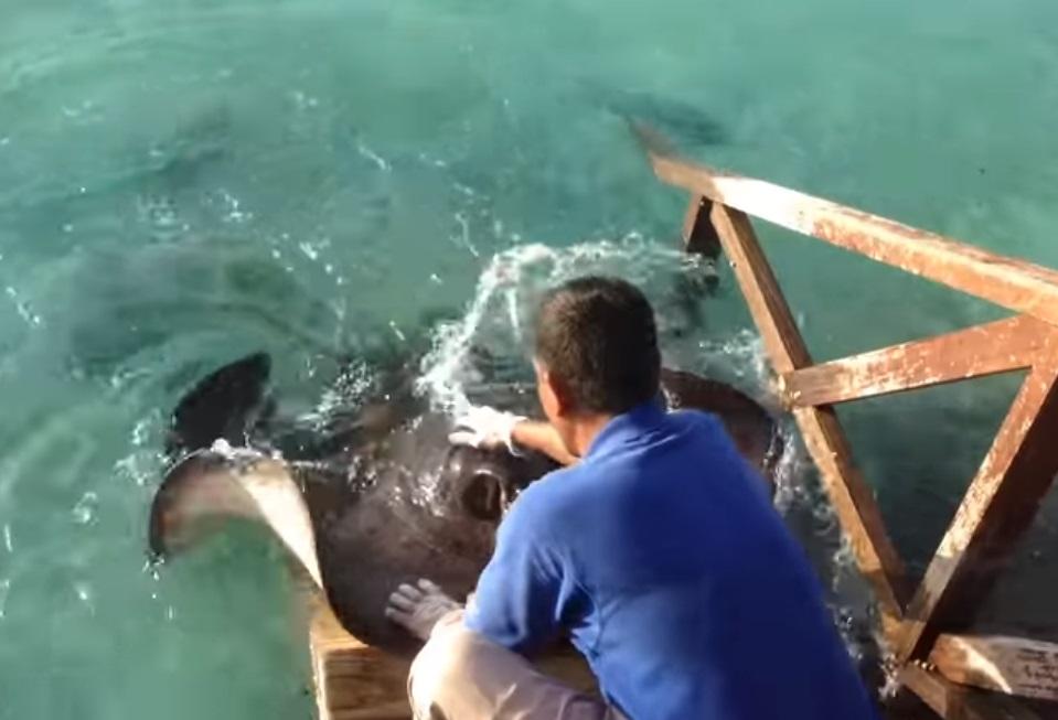 stingray, fish, ocean, food, amazing, adorable,