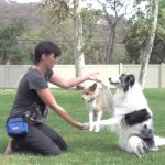 tricks, training, dogs, amazing, cute, animals, pets, how to train a dog,