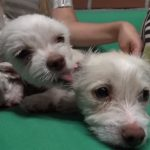 Male dog take care of 3 abandoned Puppies