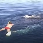 Family Rescues A Nearly-Dead Whale
