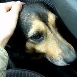 Heartwarming Transformation of a Stray Dog