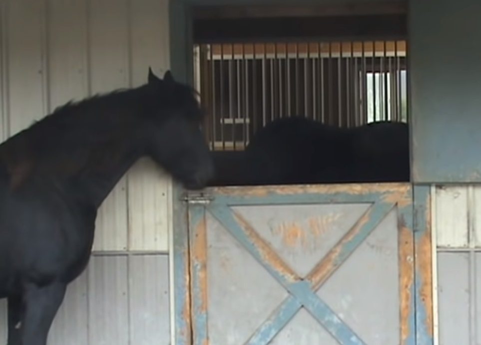 horse, smart, clever, camera, doors, stall, barn, farm,