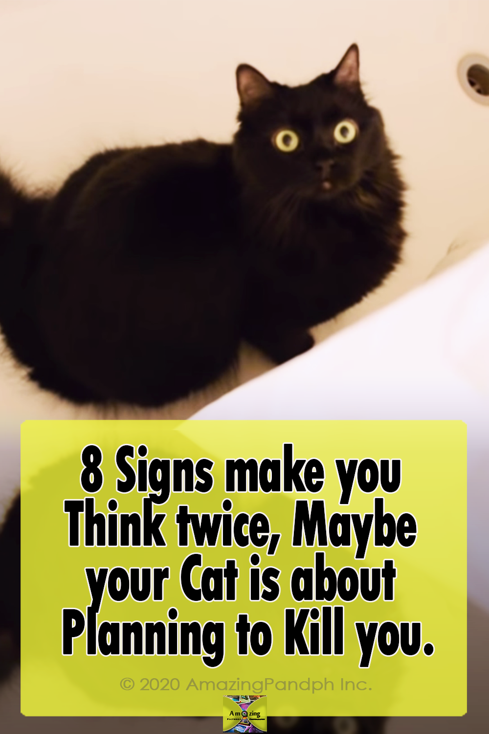 cats, signs, adorable, funny, animals, pets, records, dangerous,