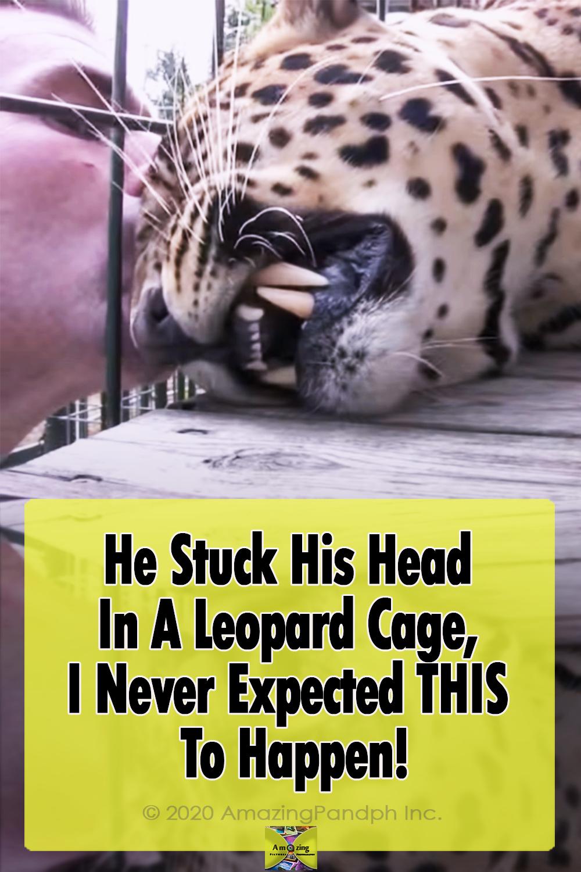 Leopard, Cage, massage, Animals, Wild, Big cats, Amazing,