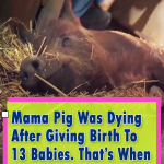 After Giving Birth To 13 Babies A Miracle Happened