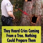 Bear cubs get stuck in a tree trunk