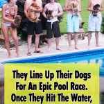 animals, dachshund, dogs, epic, funny, pool, Pool Race, race, swim, Swimming