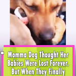 Dog cries real tears when reunited with her puppies