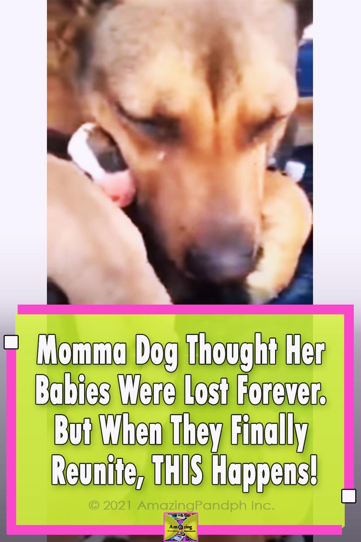 dog, animals, mom, puppies, adoption,