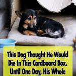 Box, dogs, stray-dog, rescue, adoption, homeless, heartwarming,