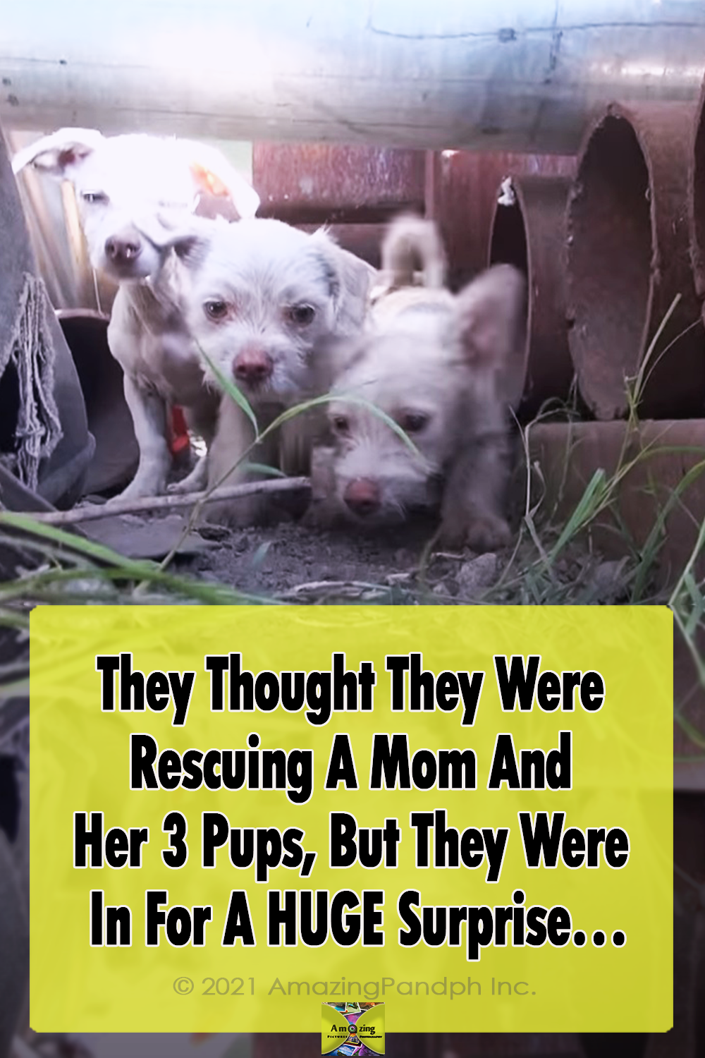 puppies, dogs, Mom, Puppy, Rescue,