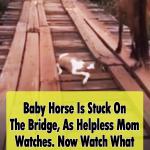 Man Rescues Baby Horse Stuck in Bridge