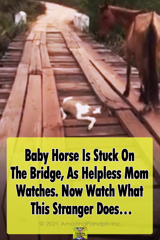 baby, Bridge, horse, rescue, amazing, faith restored, mom, beautiful, act,