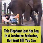 Mosha, the three-legged elephant