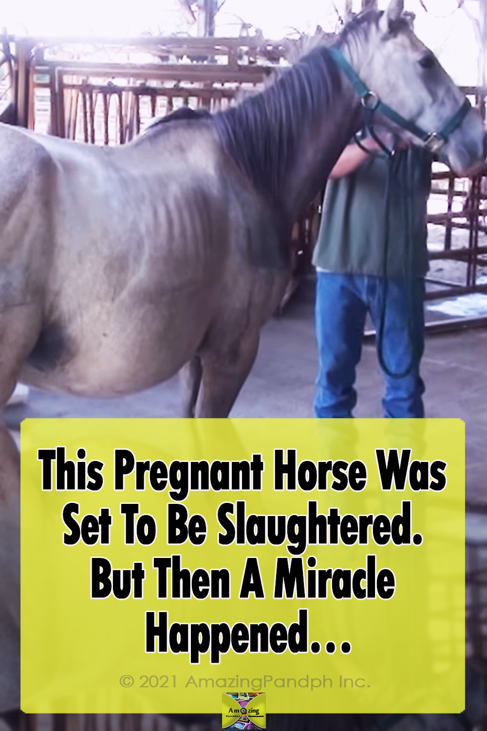 horse, Miracle, pregnant, Pregnant animals, Pregnant Horse, amazing, baby, story,