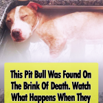 Rescued Pit Bull Takes Relaxing Bath