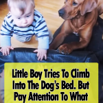 Rhodesian Ridgeback helps baby to climb into her bed