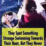 Saving a dog in Naples sea