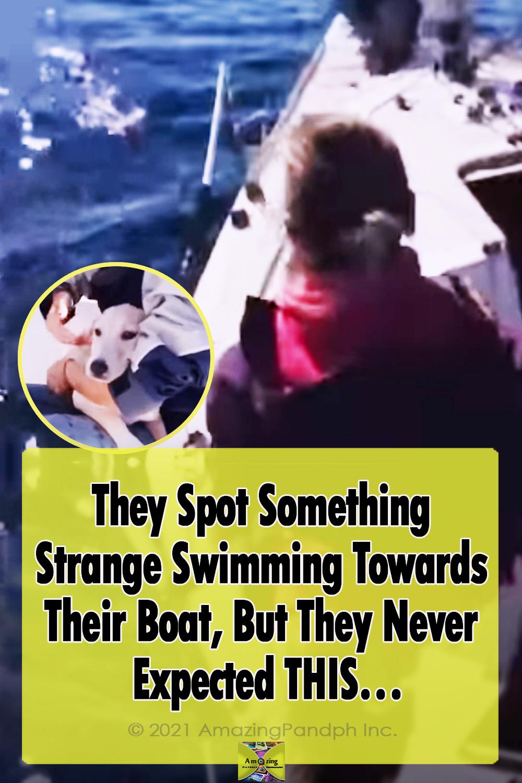 boat, Swimming, dog, rescue, sea, Naples, Itlay,