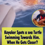 Sea kayakers rescue turtle in Trouble