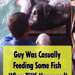 Stingray jumps out of the water for some food